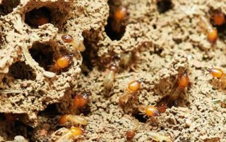 termitas plaga bilbao