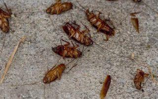 La localidad de Atxondo cercana a Bilbao sufre una plaga de cucarachas
