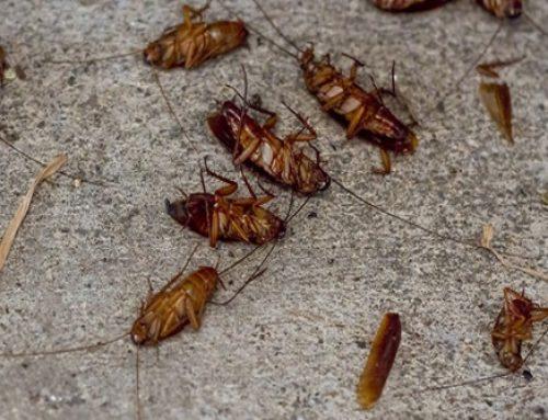 Atxondo, la localidad cercana a Bilbao, plagada de cucarachas