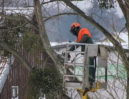 Podan árboles por un hongo en una localidad del Gran Bilbao