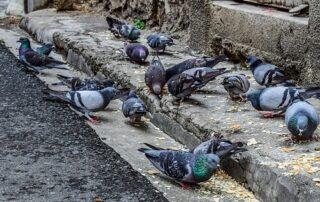 Aumenta el control de plagas en Bilbao por los animales callejeros