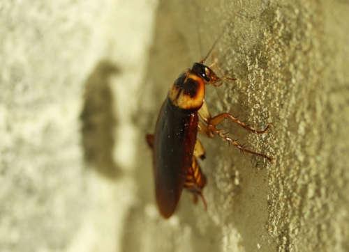 Cómo prevenir que las plagas invadan tu hogar este verano en Bilbao