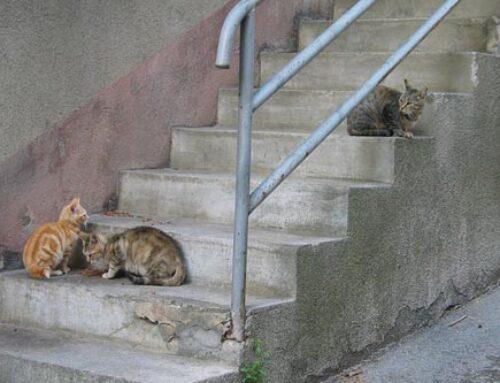 El Ayuntamiento autoriza alimentar a la plaga de gatos en Bilbao
