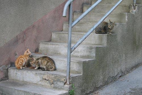 El Ayuntamiento autoriza a alimentar a la plaga de gatos en Bilbao