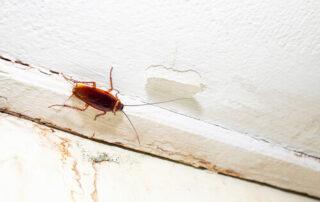 Control de plagas de cucarachas en edificios de Bilbao