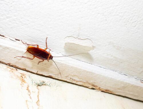 Trabajos preventivos para evitar una plaga de cucarachas en Bilbao