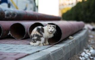 Elorrio controlará el aumento de la plaga de gatos