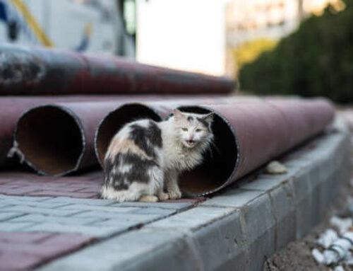 Control de plaga de gatos en Elorrio (Bizkaia)